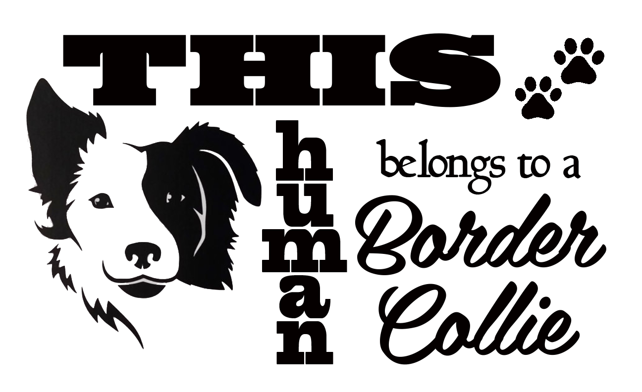 Free Border Collie SVG File